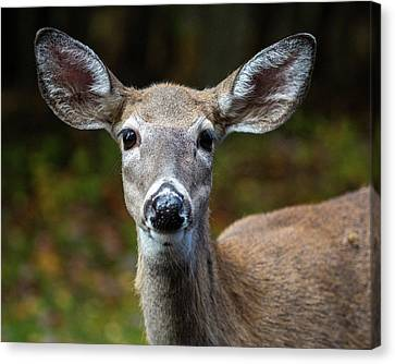 Deer Face Canvas Print