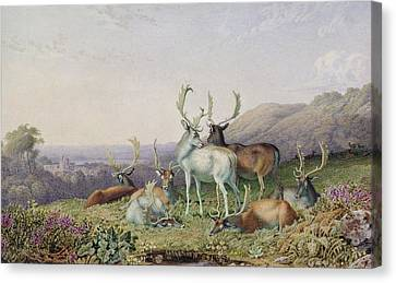 Deer In A Landscape Canvas Print by George the Younger Barret