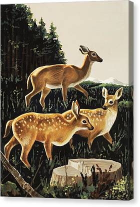 Deer In Forest Clearing Canvas Print