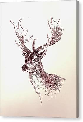 Deer In Ink Canvas Print