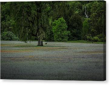 Deer In Meadow Canvas Print