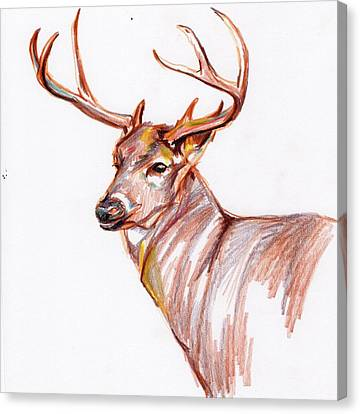Deer In Pencil Canvas Print by Anne Seay