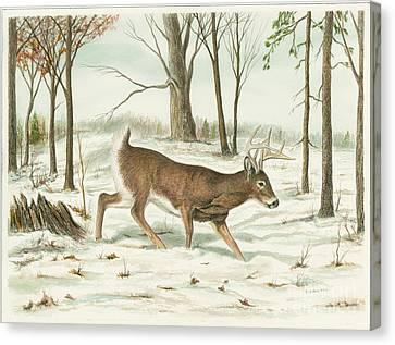 Deer In Snow Canvas Print by Samuel Showman