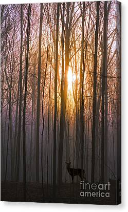 Deer In The Forest At Sunrise Canvas Print by Diane Diederich