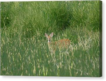 Fountain Creek Nature Center Canvas Print - Deer In The Grass by Ernie Echols
