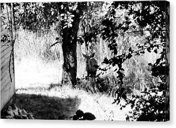 Deer In The Woods Of Dutch Flat Canvas Print