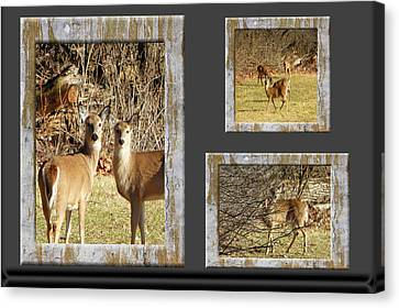 Amish Community Canvas Print - Deer Lovers by Tina M Wenger
