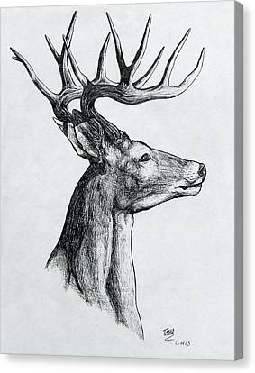 Canvas Print featuring the drawing Deer by Michael  TMAD Finney