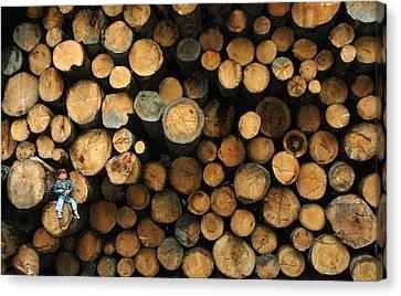 Deforestation Canvas Print by Gaffuri Mario