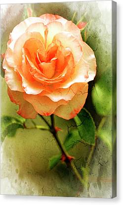 Delaney Sisters Grandiflora Canvas Print by Geraldine Scull