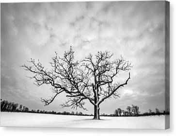 Canvas Print featuring the photograph Delaware Park Winter Oak by Chris Bordeleau