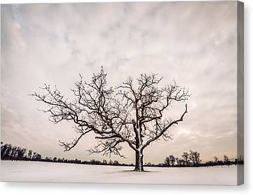 Canvas Print featuring the photograph Delaware Park Winter Oak - Color by Chris Bordeleau