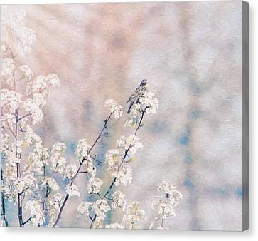 Delicate Delight Canvas Print by Dan Sproul