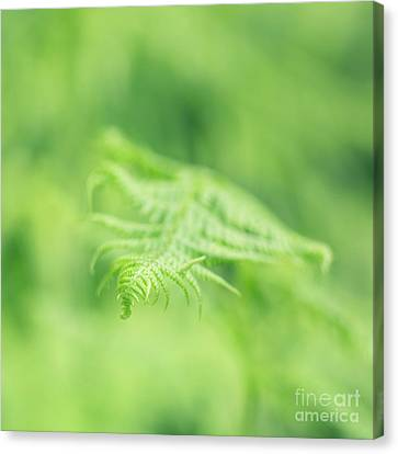 Delicate Fern - Hipster Photo Square Canvas Print by Charmian Vistaunet