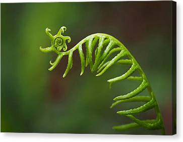 Delicate Fern Frond Spiral Canvas Print by Rona Black