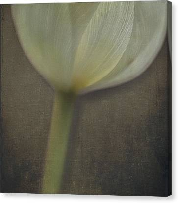 Delicate Goblet Canvas Print by Kevin Bergen