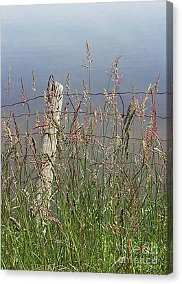 Delicate Grasses Along Fence Canvas Print by Barbara McMahon