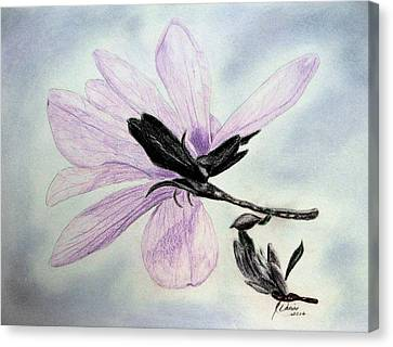 Delicate Magnolia Canvas Print by Angela Davies