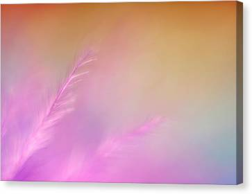 Depth Of Field Canvas Print - Delicate Pink Feather by Scott Norris