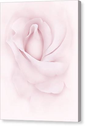 Delicate Pink Rose Flower Canvas Print by Jennie Marie Schell