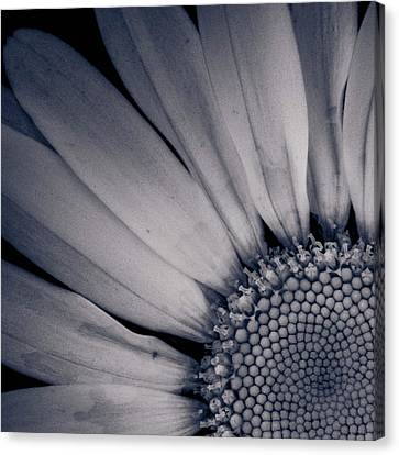 Delicate Ratio Canvas Print