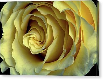 Delicate Rose Petals Canvas Print by Deborah Klubertanz