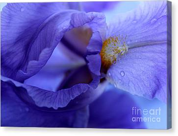 Delicate Sensation Canvas Print