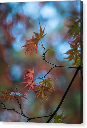 Delicate Signs Of Autumn Canvas Print by Mike Reid