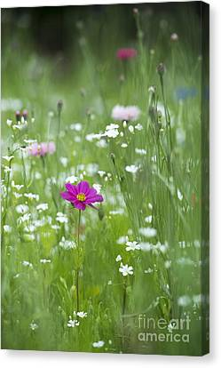 Delicate Wildflower Meadow Canvas Print by Tim Gainey
