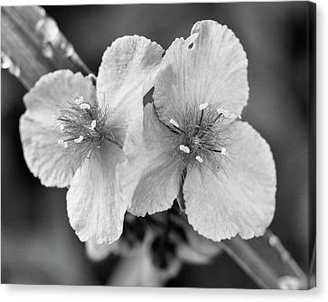Canvas Print - delicate wonder No.2 by Tom Druin