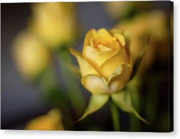 Canvas Print featuring the photograph Delicate Yellow Rose  by Terry DeLuco
