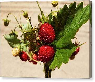 Delicious Wild Strawberry Canvas Print by Nat Air Craft