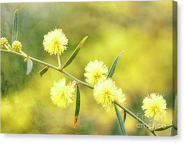 Canvas Print featuring the photograph Delights Of An Aussie Spring by Linda Lees