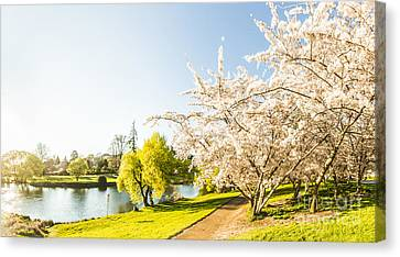 Deloraine Cherry Tree Panorama Canvas Print by Jorgo Photography - Wall Art Gallery