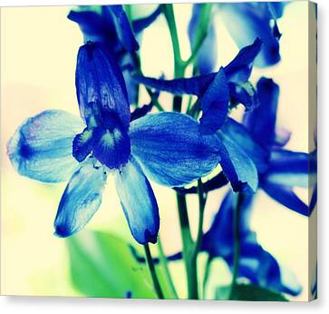 Delphinium Canvas Print by Cathie Tyler