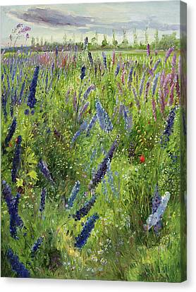 Delphiniums And Emerging Sun Canvas Print