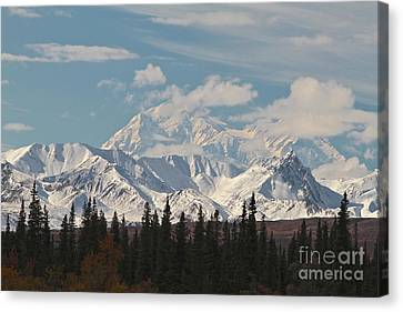 Denali In Broad Pass Canvas Print by Donna Quante