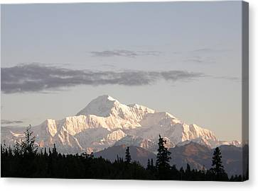 Canvas Print featuring the photograph Denali Photo by Judy Mercer
