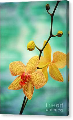 Flowers Canvas Print - Dendrobium by Allan Seiden - Printscapes