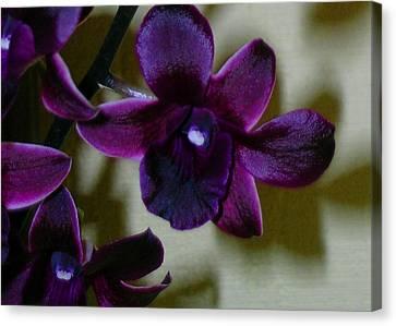 Dendrobium Nobile Orchid Canvas Print by James Temple