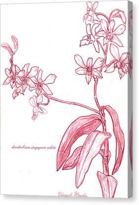 Dendrobium Singapore #2 Canvas Print by Vincent Mantia