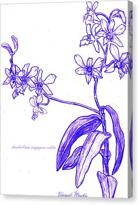 Dendrobium Singapore #3 Canvas Print by Vincent Mantia