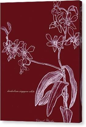 Dendrobium Singapore #4 Canvas Print by Vincent Mantia