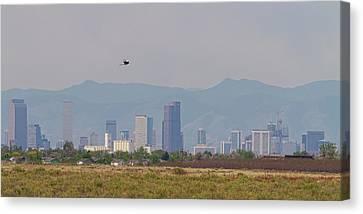 Denver Colorado Pretty Bird Fly By Canvas Print by James BO Insogna