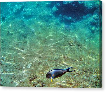 Depth. The Yellow Fin. Canvas Print by Andy Za