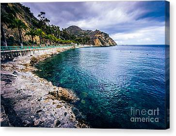 Descanso Bay Catalina Island Picture Canvas Print by Paul Velgos