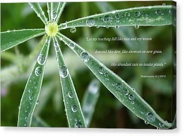 Descending Words Like Dew Canvas Print
