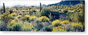 Desert Az Canvas Print