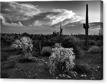 Canvas Print featuring the photograph Desert Cactus Black And White by Dave Dilli