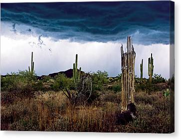 Lightening Canvas Print - Desert Cactus Storms At The Superstitions Mountains by Dave Dilli